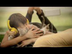 [소마통신 #013] 미국 '소울 팬케이크'사의 키튼테라피 영상 : 네이버 카페