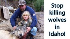 THIS IS SICK !!! In Idaho even kids learn how to hunt wolves! Voice Your Outrage Now! | https://takeaction.takepart.com/actions/demand-an-immediate-status-review-of-wolves-in-the-northern-rockies