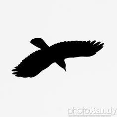 Vector Silhouette Of The Bird Of Prey Osprey In Flight