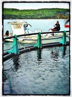 points of interest Travel, Fish Farming, Pisces, Viajes, Destinations, Traveling, Trips