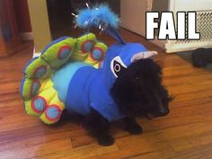 Scottish Terrier clothes and costumes | Scottish Terrier and Dog News | Page 5