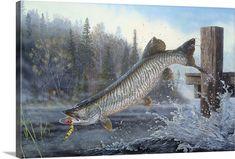 Fishing Tips, Fly Fishing, Happy Fishing, Fishing Photos, Pike Fishing, Sport Fishing, Fish Artwork, Wall Art Prints, Canvas Prints