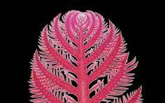 Ptilota (red algae) 10x  | 2012 Photomicrography Competition | Nikon Small World