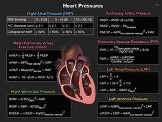 Cardiac Sonography, Ultrasound Sonography, Cardiac Nursing, Pharmacology Nursing, Medical Laboratory, Medical Science, Medical School, Female Reproductive System Anatomy, Heart Procedures