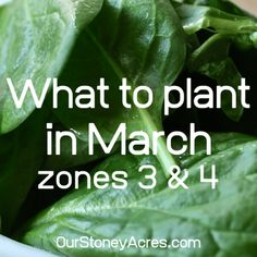 What to Plant in March in Zones 3 & 4 - Our Stoney Acres 12 quick-growing vegetables to plant when t Growing Green Beans, Tips For Growing Tomatoes, Growing Vegetables, Growing Shallots, Canned Pickled Beets, Drip Irrigation System, Drip System, Everbearing Strawberries, Garden Watering System