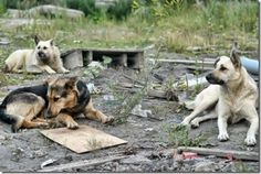 Basic Income Guaranteed and Animal Rights