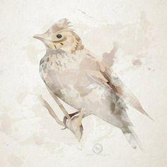 Skylark, Bird, Digital, Animals, Animales, Animaux, Birds, Animal, Animais