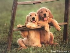 Cute Puppies cute babies animals dogs baby perfect adorable dog puppy puppies animals