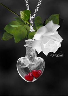 Hanging on a crystal bottle into two hearts above a innocence white rose