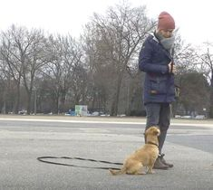 So your dog no longer pulls on a leash - Dog fun - Hunde Labrador Retrievers, Funny Animal Pictures, Funny Animals, Dog Fun, Silver Labs, Border Terrier, Labradors, Dog Leash, Dog Owners