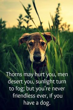Thorns may hurt you, men desert you, sunlight turn to fog; but youre never friendless ever, if you have a dog.