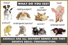 Animal Quotes, Animal Rights & Religions:
