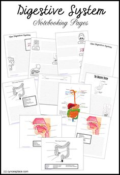 Digestive System Notebooking Pages- Great for teaching the kids or review for me!