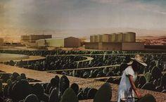 I consigli di Anna Lapini - I cactus salveranno il mondo