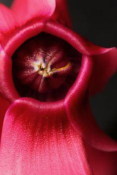 Flowers And Garden Ideas : magenta flower Magenta Flowers, Exotic Flowers, Amazing Flowers, Pretty In Pink, Beautiful Flowers, Colorful Flowers, White Flowers, No Rain, Foto Art