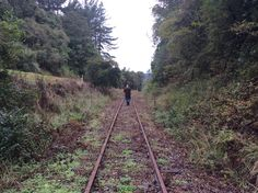 Managing Director Paul Francis walks the track at Awakeri Rail Adventures in Whakatane NZ in preparation for another day of rail Adventues Railroad Tracks, Walks, New Zealand, Adventure, Adventure Movies, Adventure Books, Train Tracks