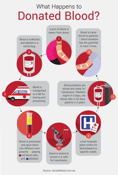 What Happens to Donated Blood - Guide to Donating Blood