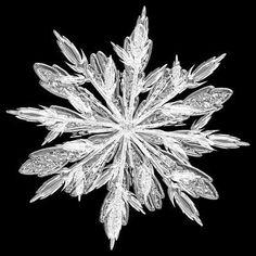 雪の結晶の写真 - 04