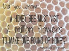 Honey Bee facts  and they are dying from more than one problem....avoid pesticide use around the flowers your bees visit...if you are lucky enough to see a honey bee. Please don't kill the big borer bees-this bee also known as the mason or carpenter bee leaves little piles of sawdust where it bores a hole to lay eggs. If you want fruit, veggies or flowers, you need pollinators so for some of us the carpenter bee is all we have.