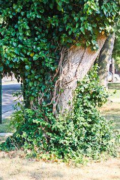 Mystical looking tree!