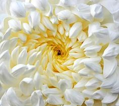 fractal columbine | Does nature and european mathematician. Beautiful 12th century ...