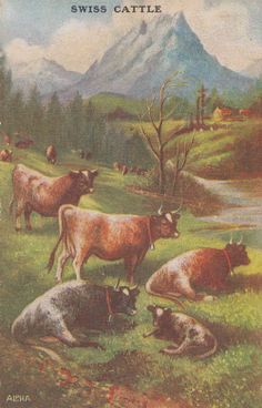 Swiss Switzerland Cattle Cow Cows Grazing Antique Postcard ♥ⓛⓞⓥⓔ♥