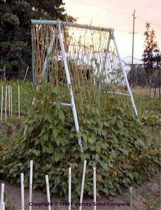 Repurposing an old swing set frame as a garden trellis.