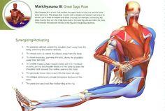 1000 images about marichyasana c on pinterest  muscles