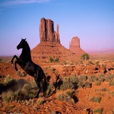 A wild mustang inside #MonumentValley Tribal Park, only 45 minutes from#BluffUtah