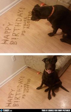 Happy Birthday! You're adopted! (Funny Animal Pictures) - #adopted #birthday #cute #dog #happy birthday #puppy