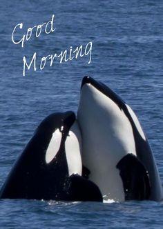 Good Morning Inspirational Quotes, Good Morning Quotes, Morning Greeting, Hugs, Funny Animals, Whale, Sayings, Morning Sayings, Big Hugs