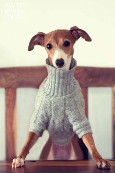 hundepullis selber stricken hund pinterest stricken. Black Bedroom Furniture Sets. Home Design Ideas