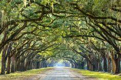 Savannah, Georgia, USA Oak Tree Lined Road at Historic Wormsloe Plantation. Photographic Print by SeanPavonePhoto at AllPosters.com