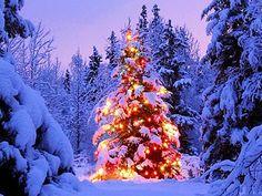 Driving home for christmas, christmas tocht, kerst uitje, kerstauto, kerstslee, kerstrally, kerst rijden, kerstfeest, kerstspecial, kerstdag, kerstmoment, kerststal, kerstwens, kerstkrans, kerstbal, kerstpiek, kerstverlichting
