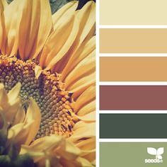 today's inspiration image for { sunflower hues } is by @_ewabakrac ... thank you for generously sharing your incredible photos in #SeedsColor , Ewa!