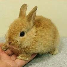 CUTE lil' bunny.