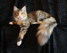 Or a kitty ... at least part Maine Coon of course http://www.mainecoonguide.com/what-is-the-average-maine-coon-lifespan/