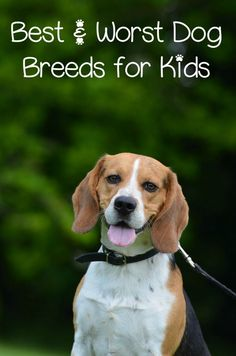 Best and Worst Dog Breeds for Kids: Planning on getting a new family dog? Before you hit the rescues, check out our list of the best and worst dog breeds for kids to bring home the right pet! Best Dogs For Kids, Best Dogs For Families, Good Family Dogs, Pets For Kids, Beagle Dog, Pet Dogs, Doggies, Animals For Kids, Cute Baby Animals