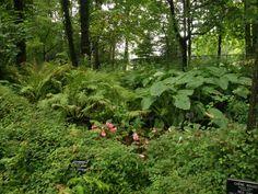 varjoon viidakkomeinkiä