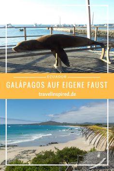 Tipps für eine günstige Galapagos Reise auf eigene Faust. Anfahrt, Unterkünfte, Highlights auf Isabela.