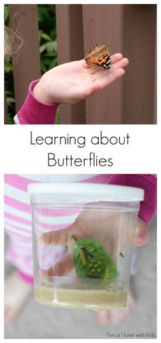 Raising Butterflies and Learning with Manipulatives from Fun at Home with Kids