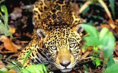Fauna- Amazonia - Brasil