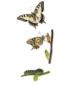 Io sono così e potrei anche... continua -> https://storiedicoaching.com/2014/03/17/io-sono-cosi-e-potrei-anche/ #coach #convinzioni #sono #essere #cambiamento #carattere #creatività #rodari #giudizio #immutabile #impossibile #calvino #possibilità #scommessa  #farfalla #bruco #evoluzione #trasformazione