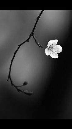 Black and White Photography Tips for Beginner's [Do it Your Self] - Poster Idee - Fotografia Beauty Photography, Amazing Photography, Photography Ideas, Artistic Photography, Simplicity Photography, Contrast Photography, Nature Photography Flowers, Photography Music, Spring Photography