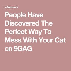 People Have Discovered The Perfect Way To Mess With Your Cat on 9GAG