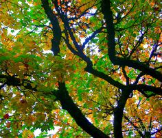 Fall Abstract  Photograph by Michael Wyatt