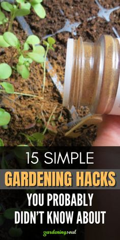 The gardening season is beginning and at this time knowing these simple but intelligent gardening hacks can help you a lot. #gardeninghacks #gardenhacks Garden Art, Garden Plants, Home And Garden, Gardening Hacks, Vegetable Gardening, Blueberry Plant, Diy Home Repair, Kittens, Cats