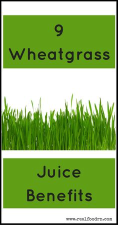 9 Wheatgrass Juice Benefits – For the past years, wheatgrass has been considered a fundamental health food with tons of health benefits. Learn how to juice it properly to get the most out of it. List Of Vegetables, Eating Vegetables, Different Vegetables, Juicing Benefits, Health Benefits, Holistic Nutrition, Health And Wellness, Food Nutrition, Nutrition Guide
