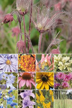 109 Plants for Low Growing Gardens;  For well drained sandy, sandy-loam and loam soils. Add color and interest to small spaces! Low-growing wildflowers only one to two feet tall are nestled in the highly ornamental Prairie Dropseed grass.