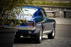 AmericanMuscle.de - Fotoshooting: Three Ford Mustang Fastback S-Code